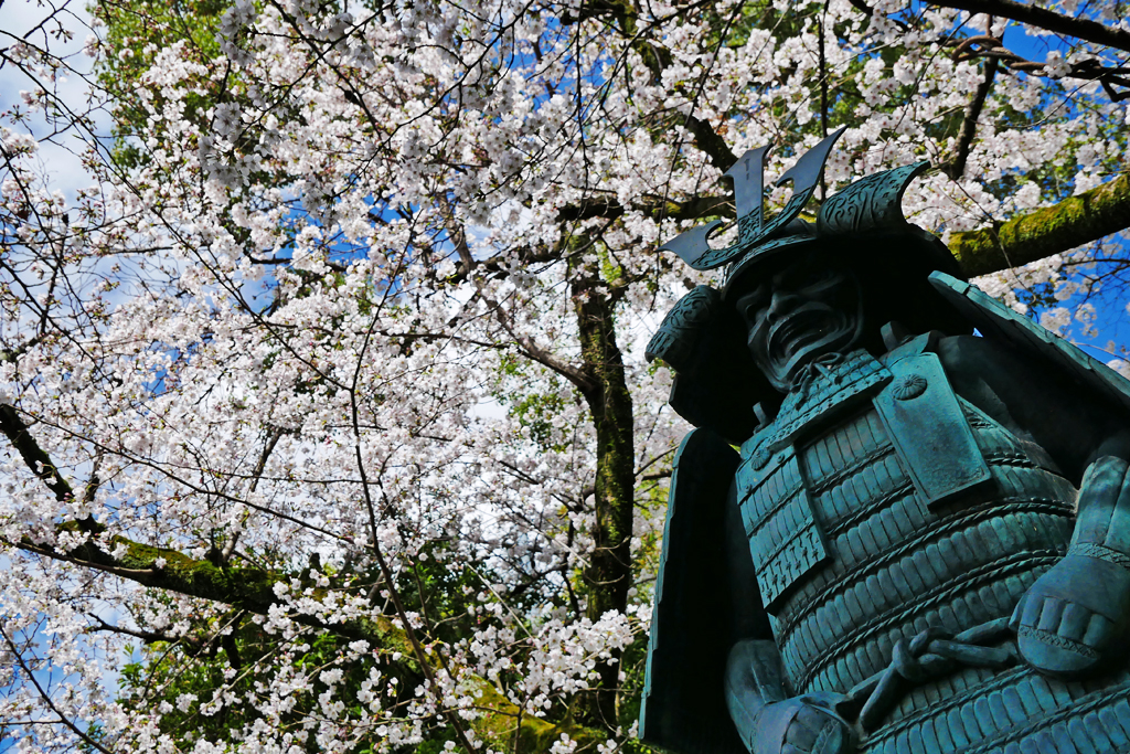 藤森神社の桜の写真素材