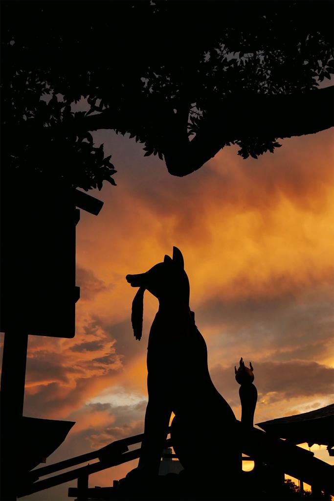 伏見稲荷の狐と夕空の写真素材
