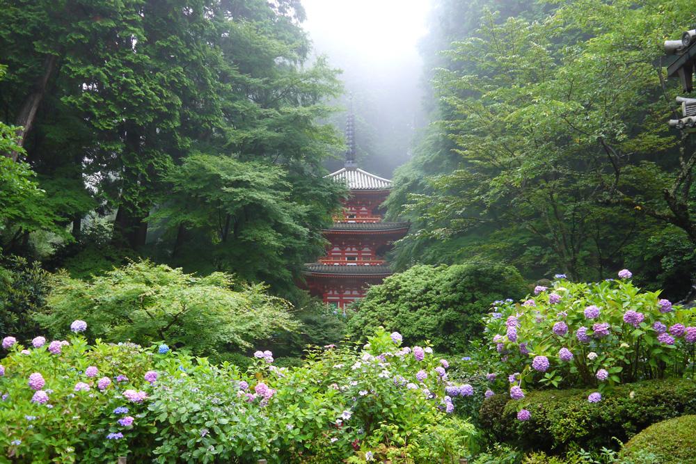 岩船寺の紫陽花と青もみじの写真素材
