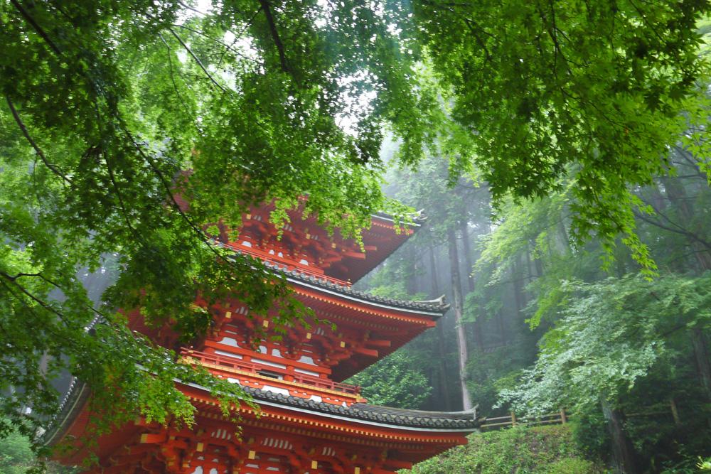 岩船寺の青もみじの写真素材