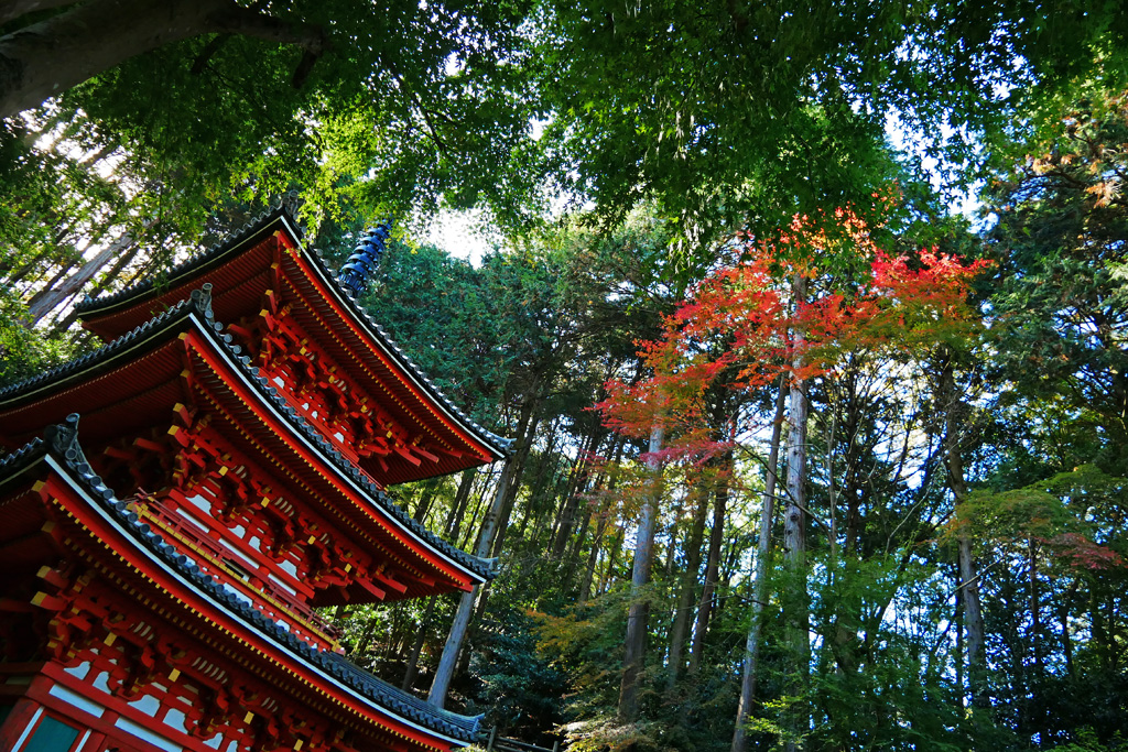 岩船寺の紅葉の写真素材