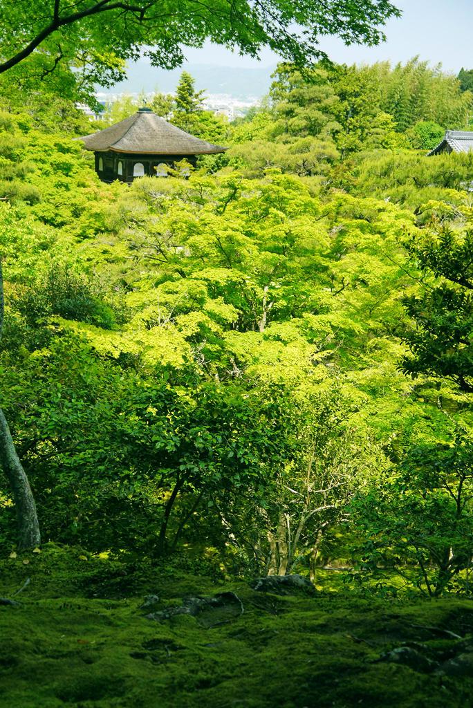 銀閣寺の鳳凰の写真素材
