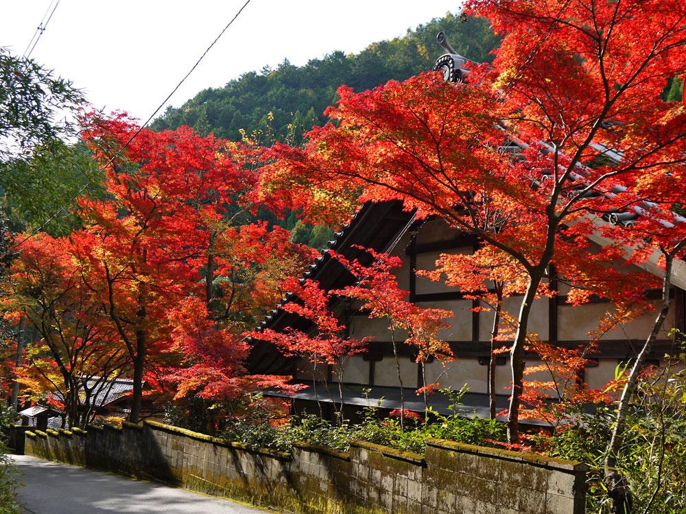 吟松寺の紅葉の写真素材
