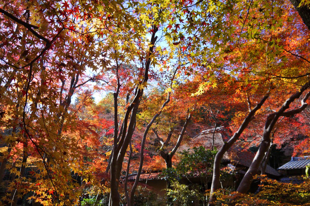 祇王寺の紅葉の写真素材