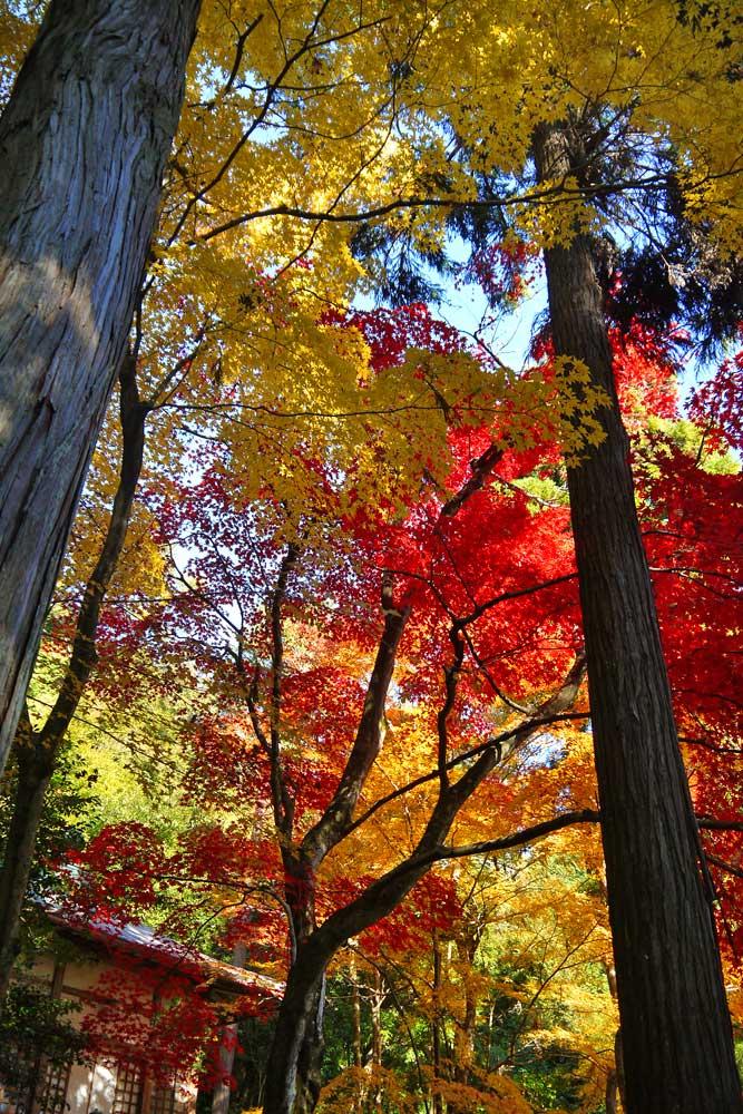 護法堂弁財天の紅葉の写真素材