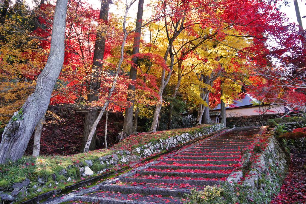 玉雲寺の紅葉