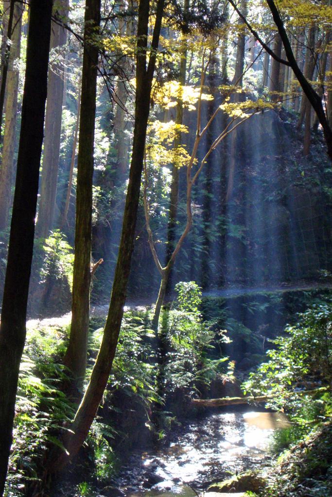 白山神社 もみじ谷の写真素材