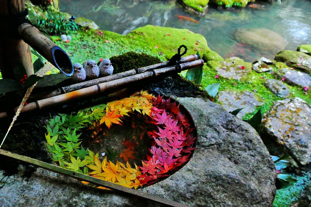 柳谷観音の花手水の写真素材
