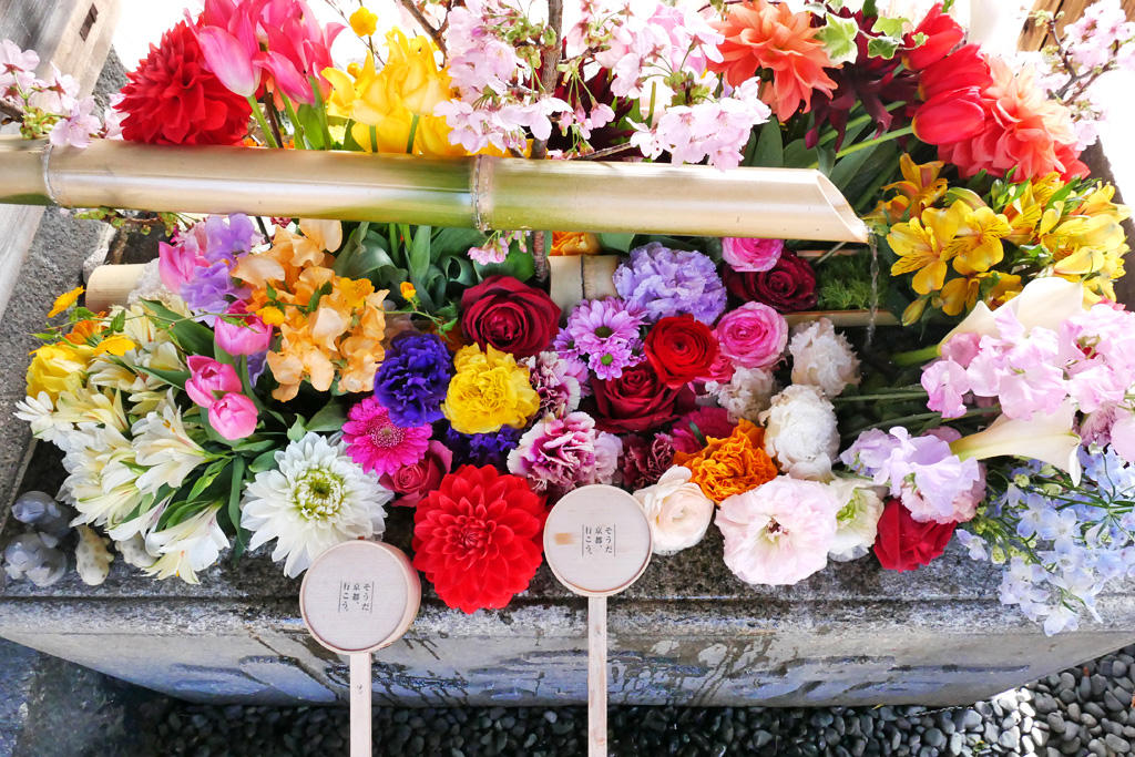 東福寺勝林寺の花手水の写真素材