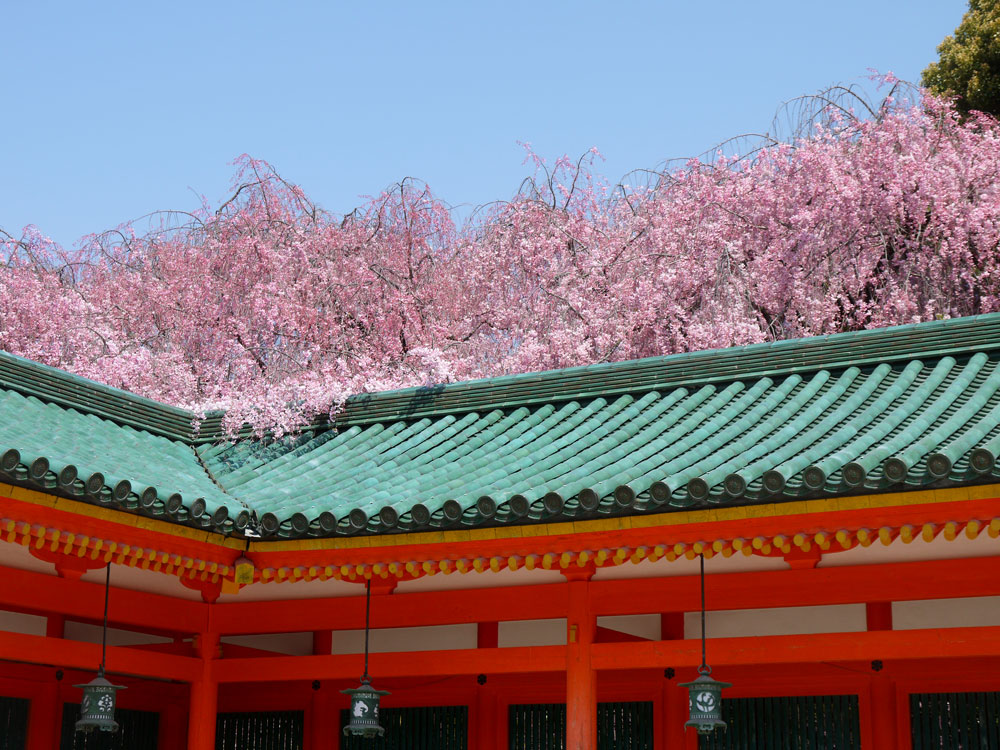 平安神宮神苑の桜
