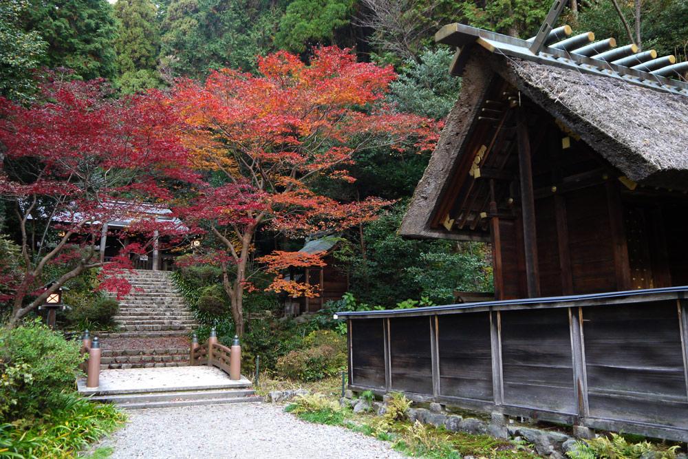 日向大神宮の紅葉