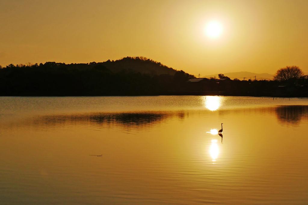 広沢池の写真素材