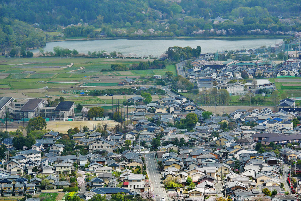 桜 広沢池の写真素材