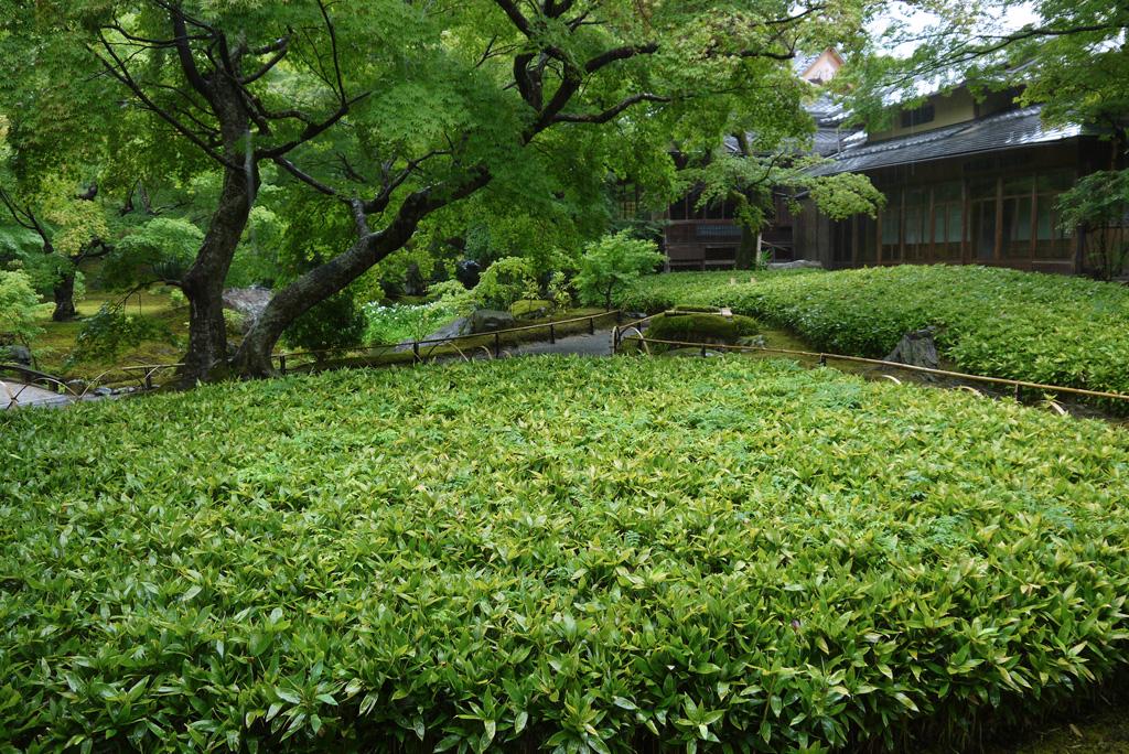 雨の天龍寺宝厳院の写真素材