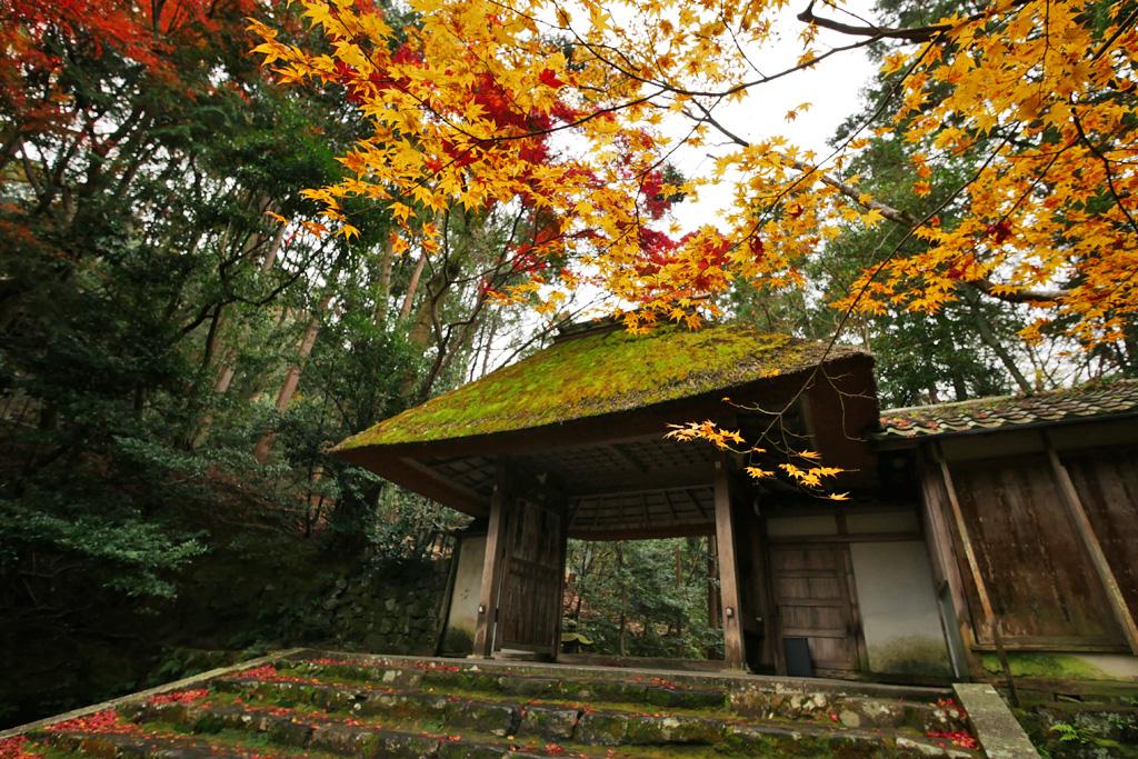 法然院の紅葉の写真素材