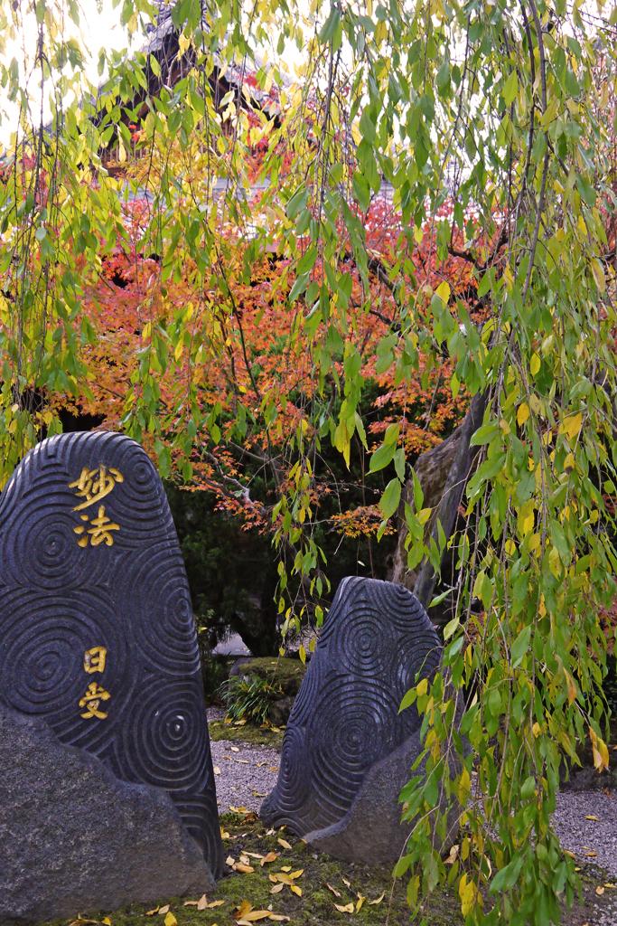 本満寺の写真素材