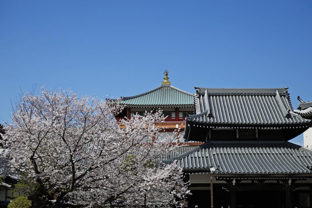 本法寺の写真素材