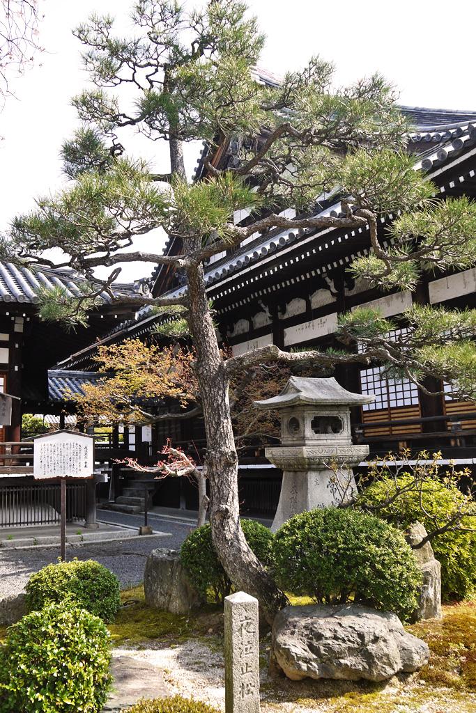本隆寺の松の写真素材