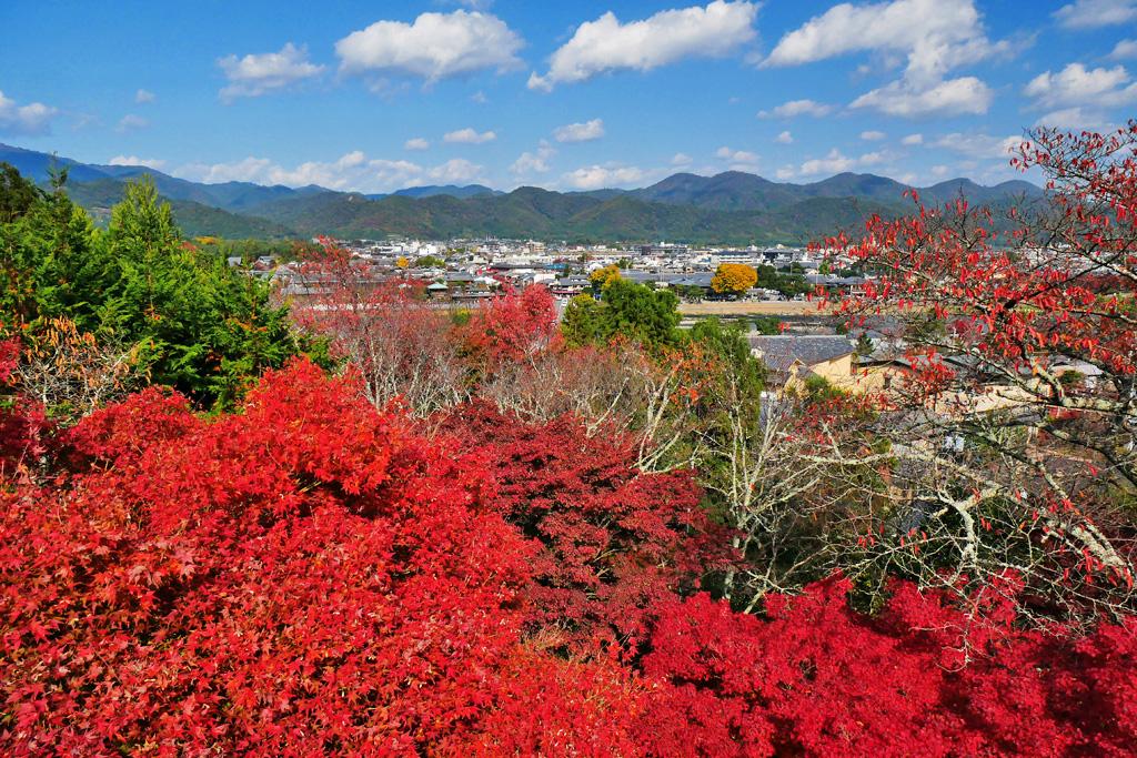 虚空蔵法輪寺の紅葉の写真素材