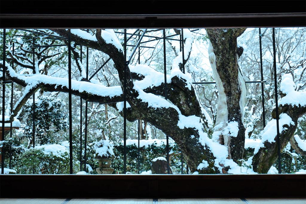 雪景色の宝泉院の写真素材