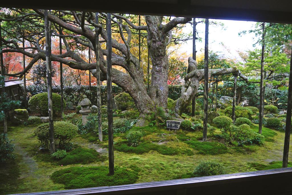 宝泉院の五葉の松の写真素材