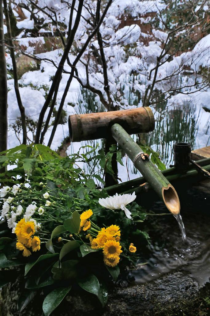 宝泉院の花手水の写真素材