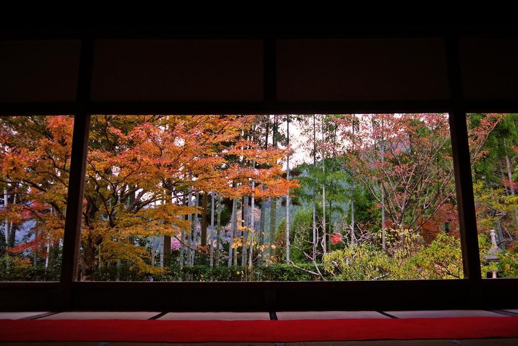 宝泉院の紅葉の写真素材