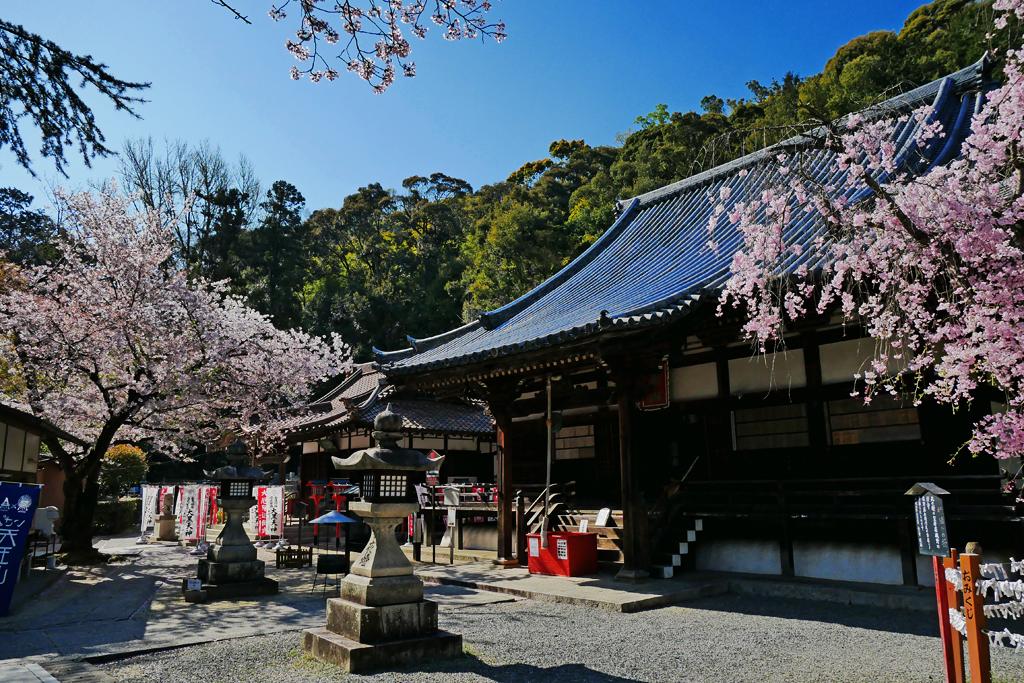 宝積寺(宝寺)の桜の写真素材