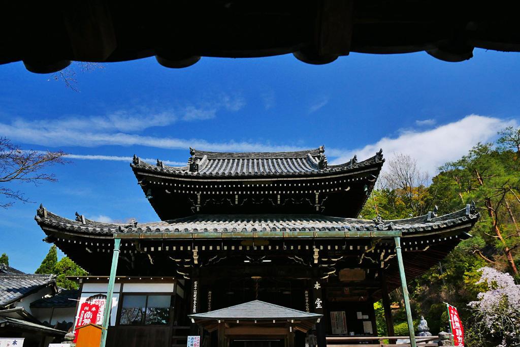 今熊野観音寺の桜の写真素材