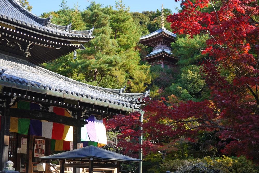 今熊野観音寺の紅葉の写真素材