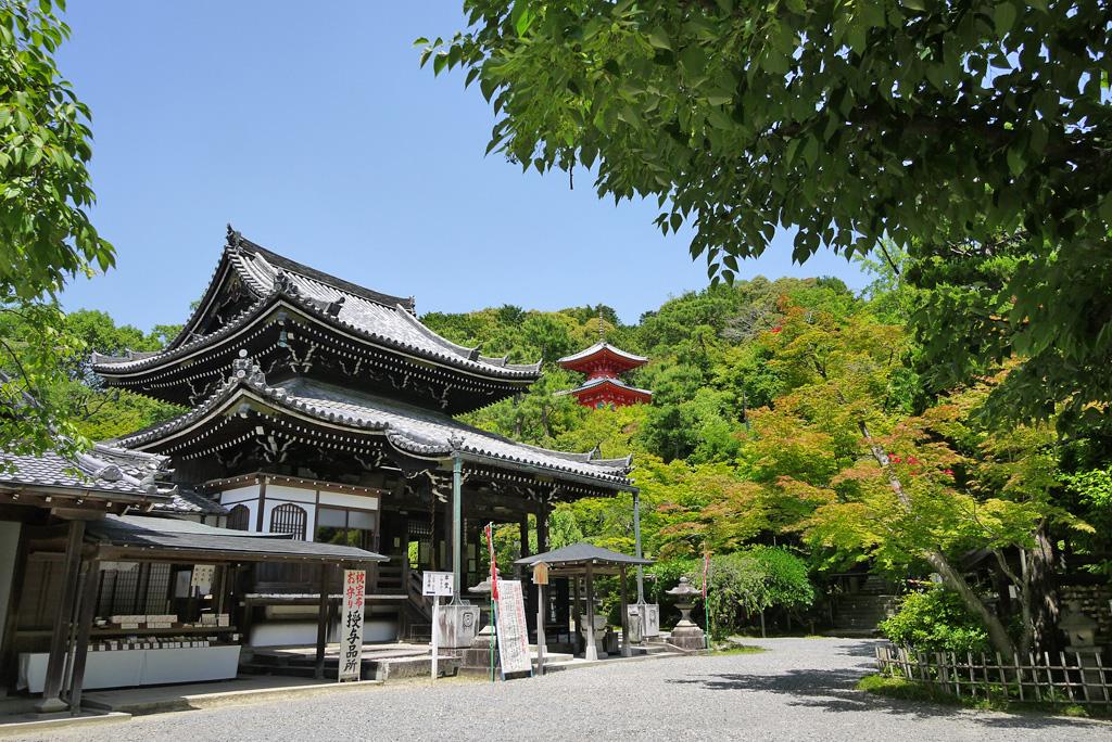 今熊野観音寺の青もみじの写真素材