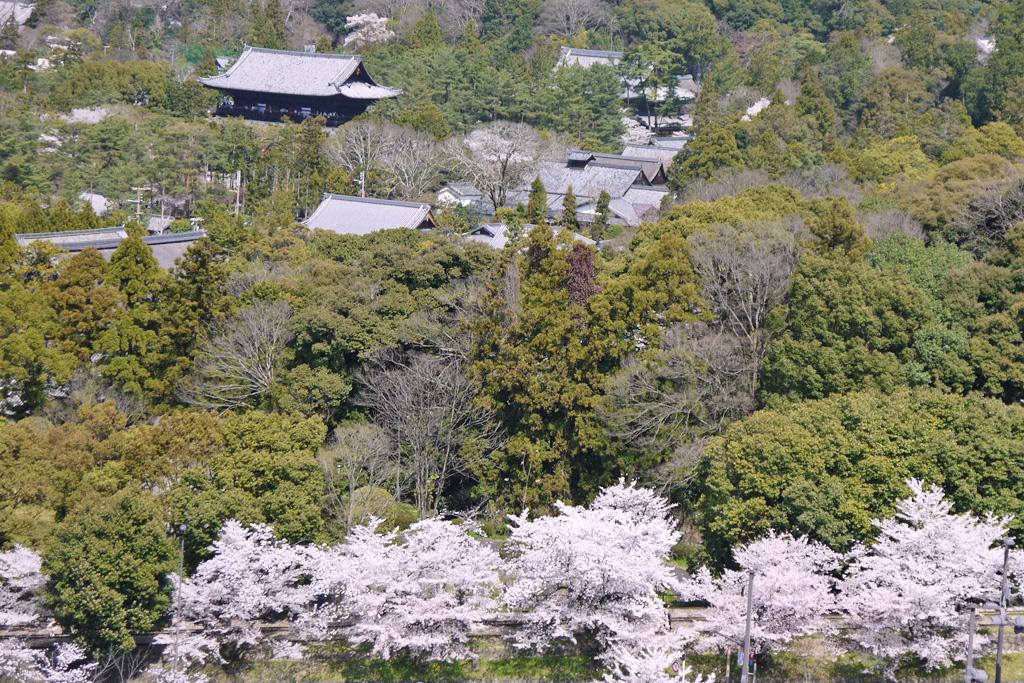 京都 蹴上のインクラインの桜の写真素材