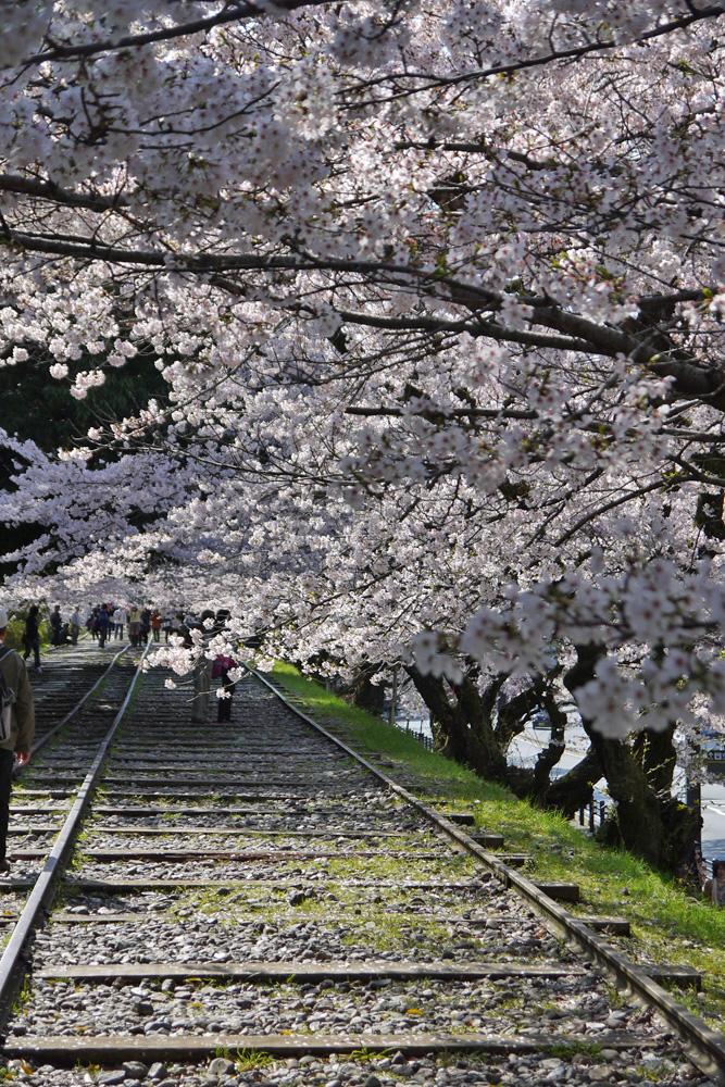 京都 蹴上のインクラインの桜