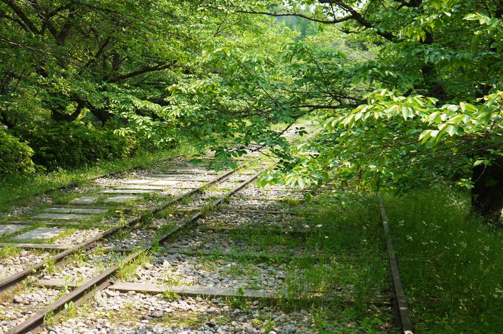 京都 蹴上のインクラインの新緑