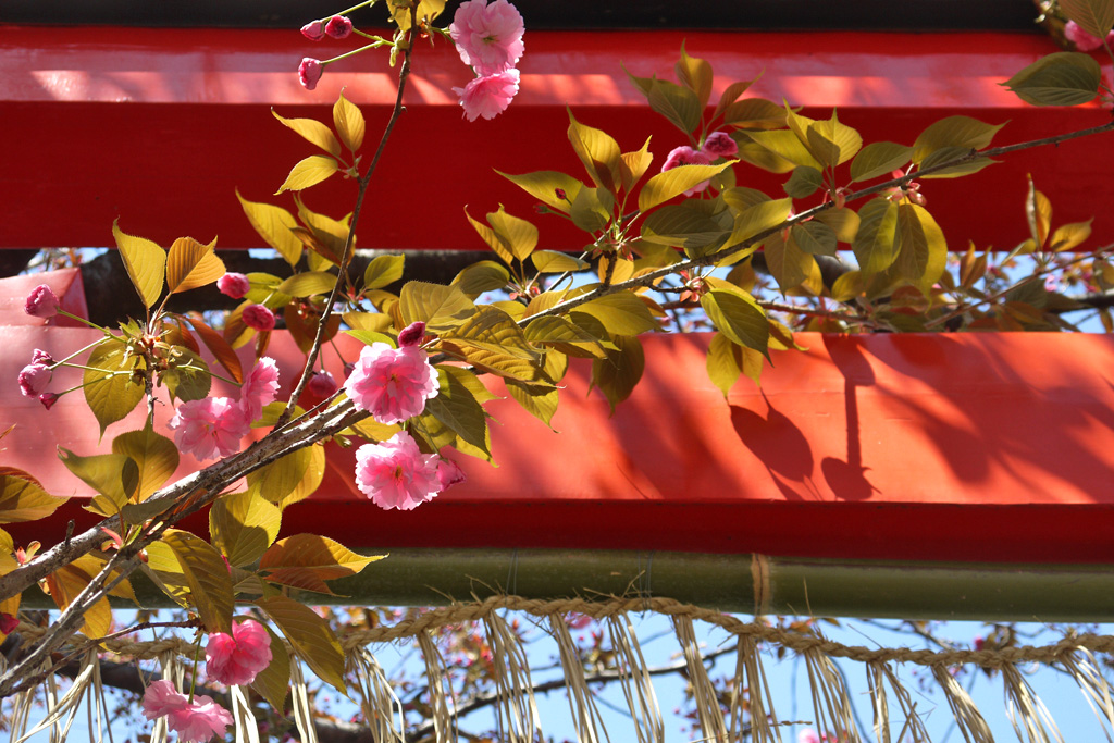 石井神社の写真素材