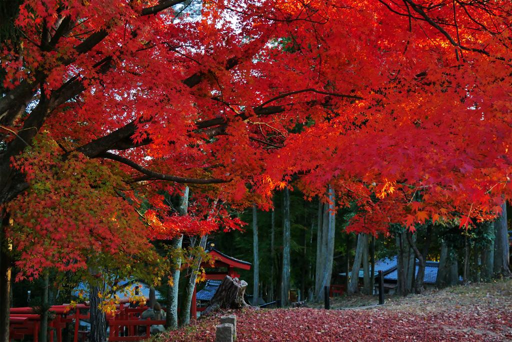 磐栄稲荷宮の紅葉の写真素材