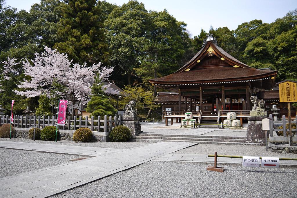 出雲大神宮の桜の写真素材