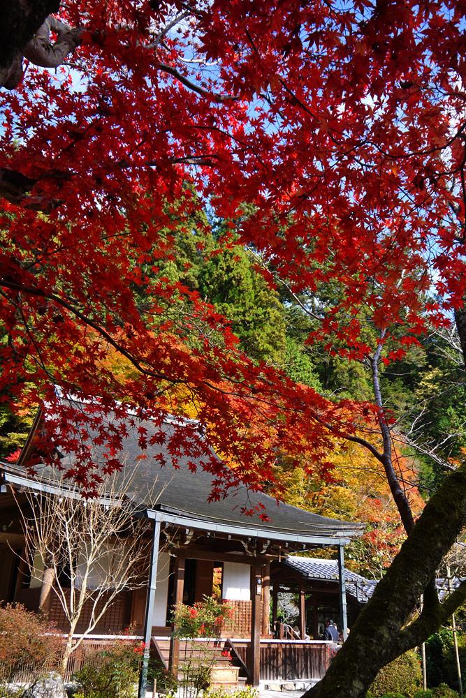 寂光院の紅葉の写真素材