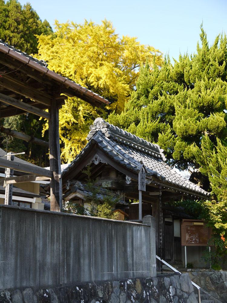 慈眼寺のイチョウの紅葉の写真素材