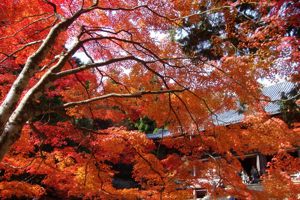 神護寺の紅葉の写真素材