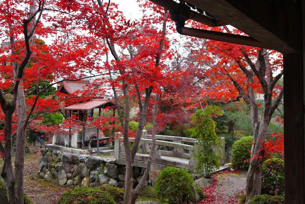神光院の紅葉の写真素材