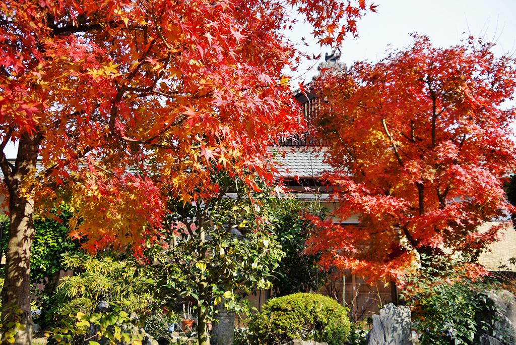 神応寺(八幡市)の写真素材