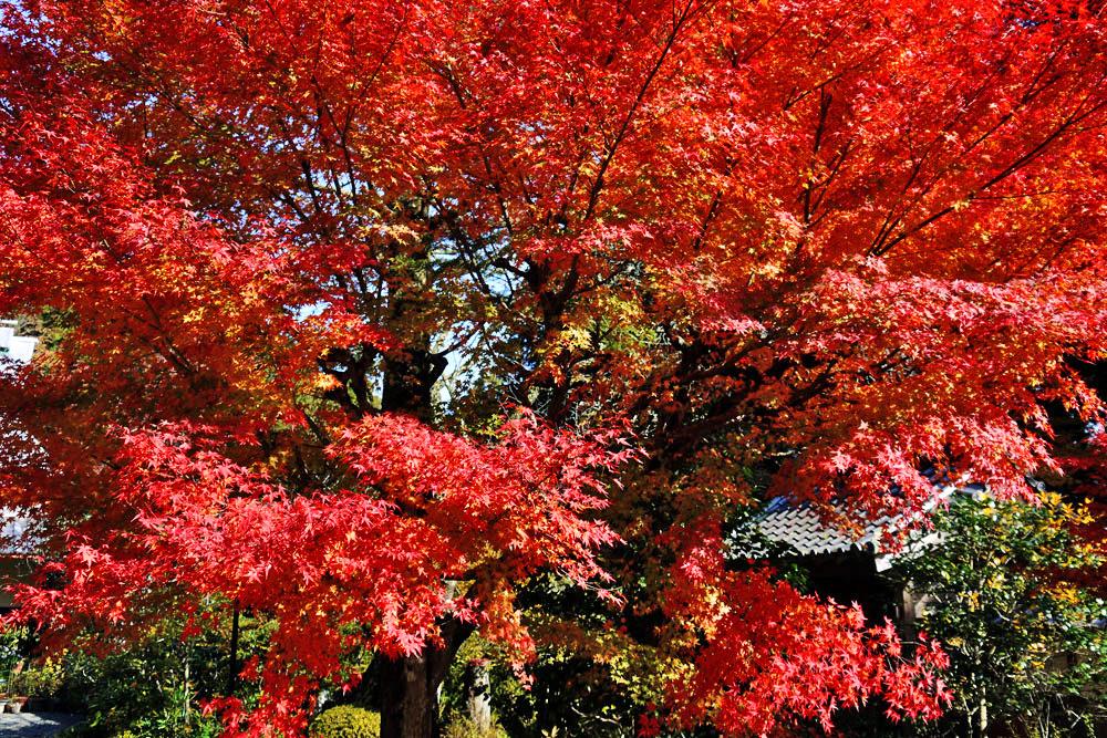 亀岡 神蔵寺の紅葉
