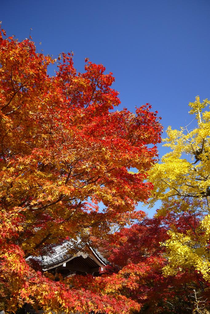 常寂光寺の鐘楼の紅葉の写真素材