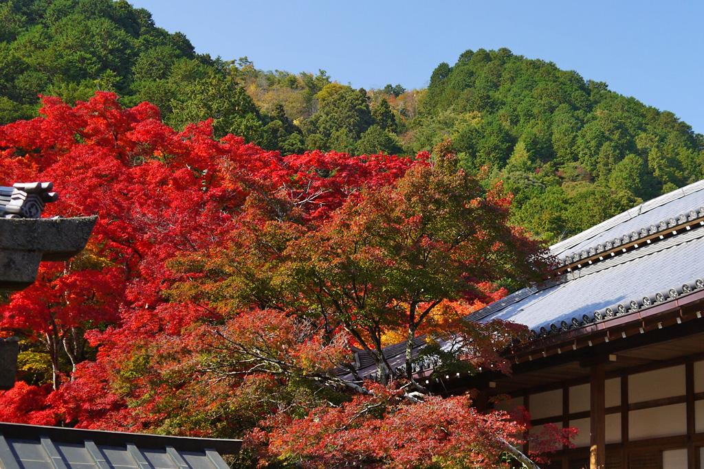 常寂光寺の本堂の紅葉の写真素材