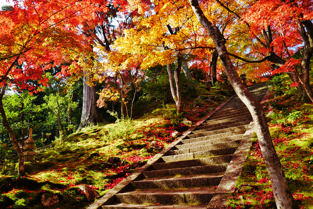 常寂光寺の紅葉の写真素材
