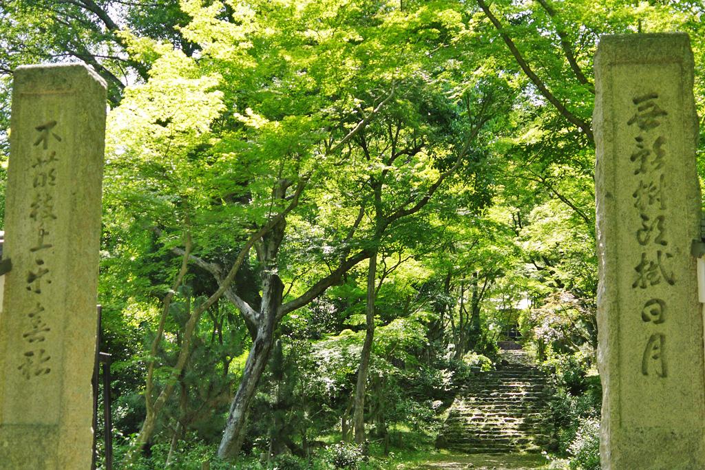 浄住寺の青もみじの写真素材