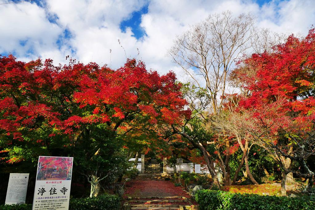 浄住寺の紅葉の写真素材