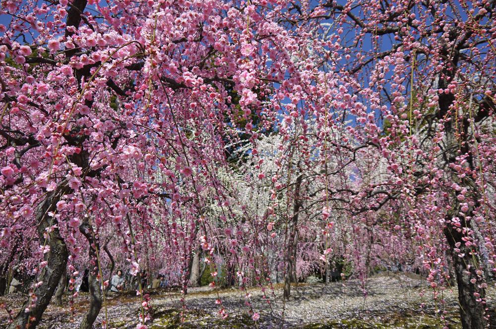 城南宮の梅の写真素材