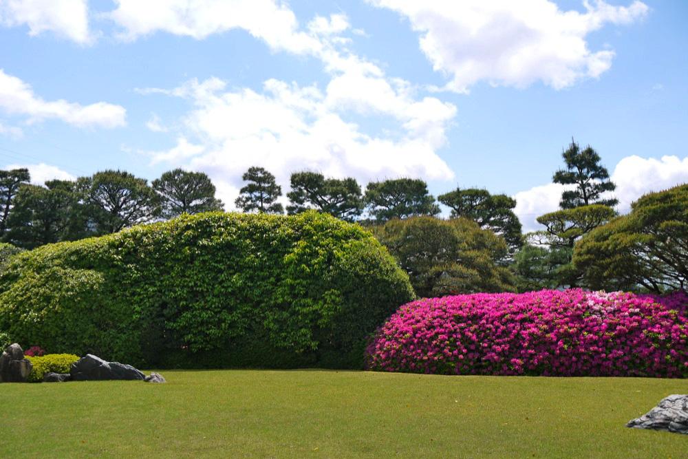 城南宮のツツジと藤の写真素材